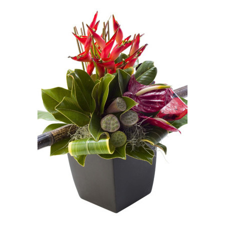 Tropical and Native pot arrangement