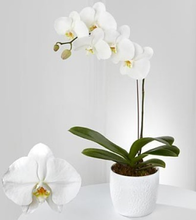 SPECIAL Orchid Plants