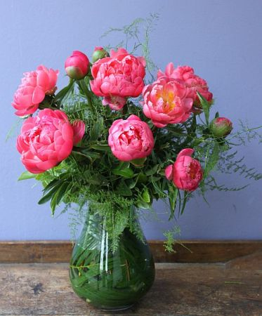 New Zealand Coral Peony  in a Vase